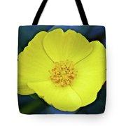 Island Bush Poppy In Rancho Santa Ana Botanic Garden In Claremont-california  Tote Bag