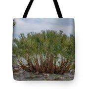 Island Palms Tote Bag