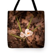 Isolated Crocus Tote Bag