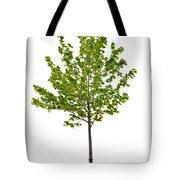 Isolated Young Maple Tree Tote Bag by Elena Elisseeva