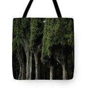 Italian Cypress Trees Line A Road Tote Bag