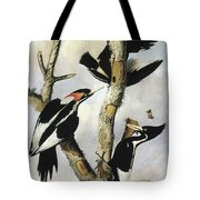 Ivory-billed Woodpeckers Tote Bag