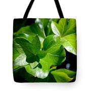 Ivy In Sunlight Tote Bag