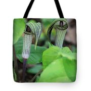 Jack In The Pulpit Enhanced Tote Bag