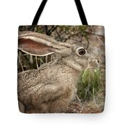 Jack Rabbit Portrait Tote Bag