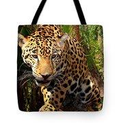 Jaguar Adolescent Tote Bag