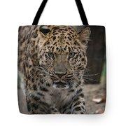 Jaguar On The Prowl Tote Bag