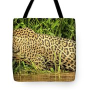 Jaguar Prowls The River's Edge Tote Bag