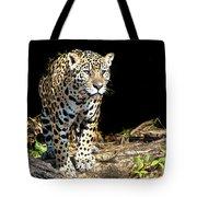 Jaguar Stare Tote Bag