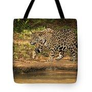 Jaguar Walking Beside River In Dappled Sunlight Tote Bag