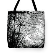 January Beauty 2 Black And White  Tote Bag