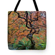 Japanese Garden Lace Leaf Maple Tree In Fall Tote Bag