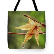 Japanese Maple In The Rain Tote Bag