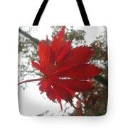Japanese Maple Leaf 2 Tote Bag