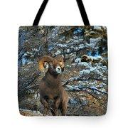 Jasper Alpha Male Tote Bag