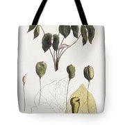 Jeffersonia Diphylla Tote Bag