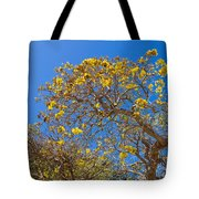 Jerusalem Thorn Tree Tote Bag