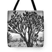 Joshua Trees Bw Tote Bag
