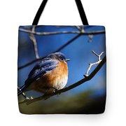 Juicy Male Eastern Bluebird Tote Bag