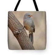 Jungle Babbler Tote Bag