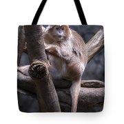 Jungle World Monkey3 Tote Bag