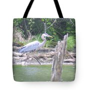 Just An Evening Stroll II Tote Bag
