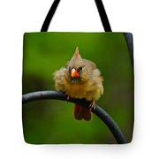 Just Doing A Little Feather Fluffing Tote Bag
