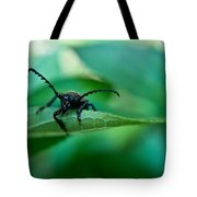 Just Looking For Another Beetle Tote Bag