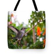 Juvenile Anna's Hummingbird Warm-up Tote Bag