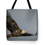 Juvenile Bald Eagle 02 Tote Bag