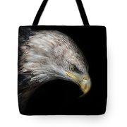 Juvenile Bald Eagle Portrait Tote Bag