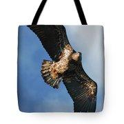 Juvenile Bald Eagle Two Tote Bag