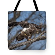 Juvenile Bald Eagle With A Fish Drb0218 Tote Bag