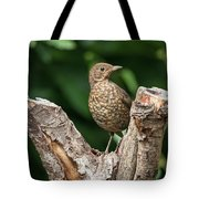 Juvenile Black Bird Turdus Merula Fledgling In Tree Stump In For Tote Bag