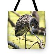Juvenile Black Crowned Night Heron Tote Bag