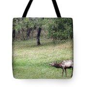 Juvenile Bull Elk Grazing 2 Tote Bag