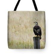 Juvenile Eagle On Post Tote Bag
