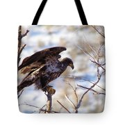 Juvenile Eagle Taking Off   Tote Bag