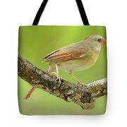 Juvenile, Female Cardinal, Animal Portrait Tote Bag