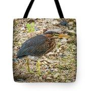 Juvenile Green Heron Tote Bag