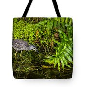 Juvenile Night Heron Tote Bag