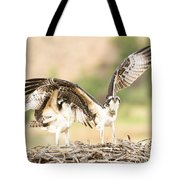 Juvenile Osprey Testing Their Wings Tote Bag