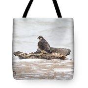 Juvenile Peregrine Falcon Tote Bag