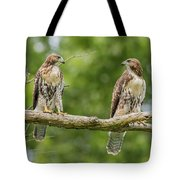 Juvenile Red-tailed Hawks Eyeing Each Other Tote Bag