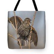 Juvenile Red Winged Blackbird Tote Bag