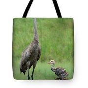 Juvenile Sandhill Crane With Protective Papa Tote Bag