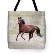 Kaimanawa Stallion Tote Bag