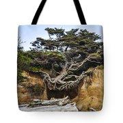 Kalaloch Hanging Tree Tote Bag