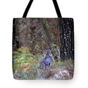 Kangaroo In The Forest Tote Bag