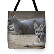 Kangaroo Relaxing On Ground In The Sun Tote Bag
